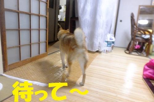 DSCF9625.JPG