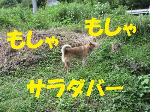 IMG_4589.JPG