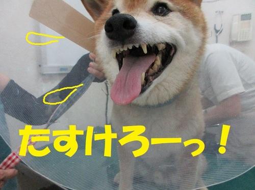 IMG_5297.JPG